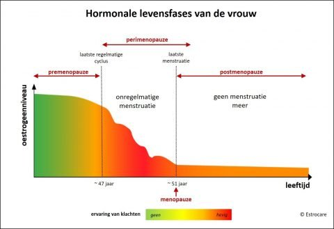 Hormonale fases van de vrouw_groot